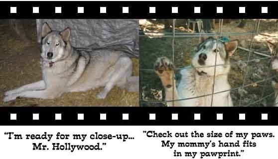wolf-photo3