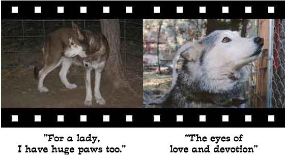wolf-photo4