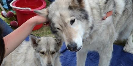 Wanagi Wolf Rescue Ambassadors